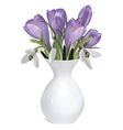 Bouquet of crocuses and snowdrops vector image vector image