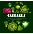 Cabbage vegetable poster for food design vector image vector image