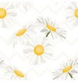 daisy chamomile camomile spring summer flowers vector image vector image