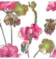 Geranium flowers buds leaves vector image vector image