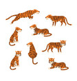 powerful tiger in different actions set cartoon vector image vector image