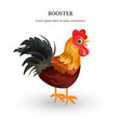 rooster detailed colorful vector image