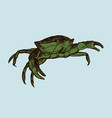 crab line drawing vector image vector image