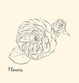 hand draw of flower vector image vector image