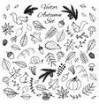 hand drawn set autumn leaves animals acorns vector image