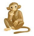 monkey icon cartoon style vector image vector image