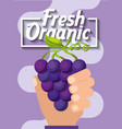 hand holding fresh organic fruit grapes vector image