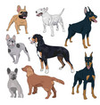 standing dogs collection isolated on white vector image vector image