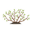 young bush plant isolated vector image vector image