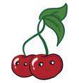 a pair great cherries smiling or color vector image vector image