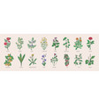 collection of wild meadow herbs blooming flowers vector image vector image