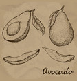 hand drawn avocado set whole avocado sliced vector image vector image