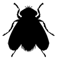ordinary fly vector image vector image