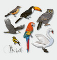 bird collection set vector image vector image