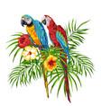 macaw parrots vector image