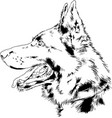 pedigree dog drawn in ink hand vector image