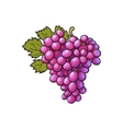 red grapes isolated on white background vector image