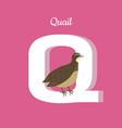 animals alphabet letter - q vector image vector image