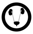 bladder and kidney the black color icon in circle vector image