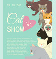 cats show invitation card grooming or veterinary vector image vector image