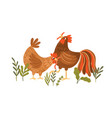 cute hen and rooster eating worms domestic vector image vector image