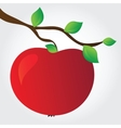 apple on a branch vector image vector image