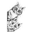 cats wall sticker vector image vector image