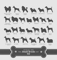 dog set - small breeds collection vector image vector image