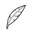 isolated feather design vector image