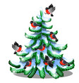 merry bullfinches sit on a snowy spruce isolated vector image