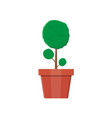 plant tree in flower pot decoration home plant vector image vector image