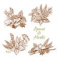 spices or herbs sketch seasonings vector image vector image
