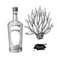tequila bottle with blue agave mexican alcohol vector image