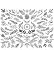 hand drawn floral decor leaves sketch ornamental vector image