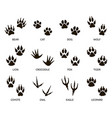 predator footprint wild animals paw prints cat vector image