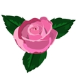 rose closeup on a white background vector image vector image