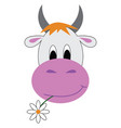 jersey cow with a flower in its mouth looks cute vector image