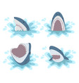 shark with open jaws set vector image