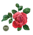 Single rose vector image vector image