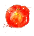 watercolor red tomato vector image