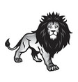 wild lion stance vector image