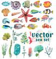 watercolor sea life seaweed shell fish sea vector image