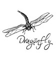 hand drawn ink of dragonfly vector image vector image