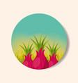 plantation vegetable harvesting onion vector image