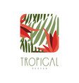 tropical logo template design square badge with vector image vector image