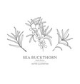 hand drawn sea buckthorn branches vector image vector image