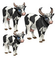maturation stages of cow three stages of growth vector image