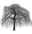 mulberry tree without leaves vector image vector image