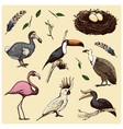 hand drawn realistic bird sketch graphic vector image