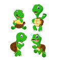 collection of the green tortoise vector image vector image